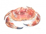 Lobsters & Crustacea watercolours
